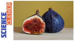 https://scienceclever.com/figs-for-weight-loss-here-all-the-benefits/