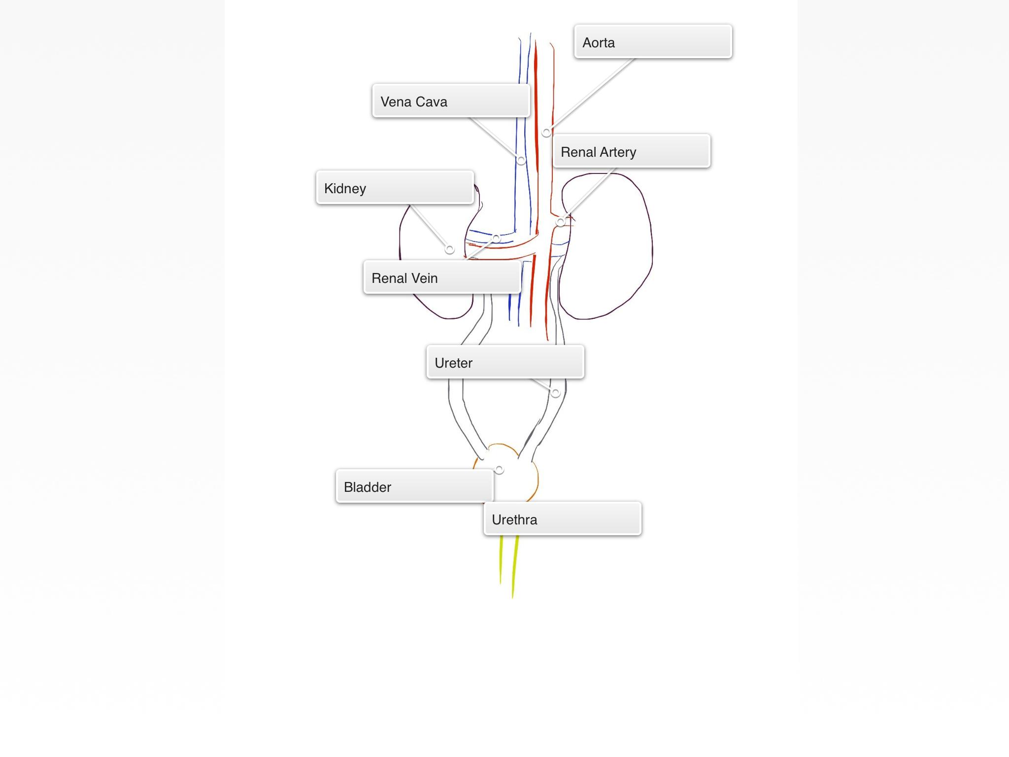 excretory system diagram labeled dodge durango radio wiring human