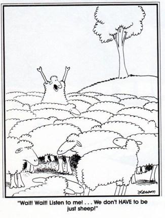 culture_more than sheep