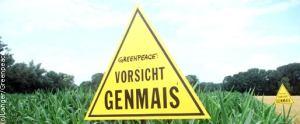 greenpeace_genmais_