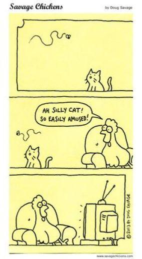 Savage chicken Cats