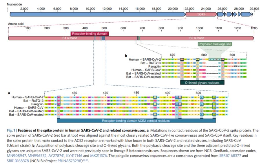 https://i0.wp.com/sciencefiles.org/wp-content/uploads/2020/04/Andersen-Genom-SARS-CoV-2.png?ssl=1
