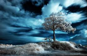 badasstree