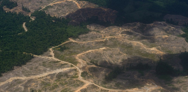 Deforestation Is One Of The Main Drivers Of Desertification And The Processes That Set Desertification In Motion