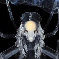 Deep Sea Animals & Life -- Fundamental Patterns, Convergent Evolution, & Other Worlds