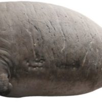 Stellar's Sea Cow, Stories, Myths, & Their Connection With Now Extinct Animals