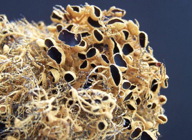 Antarctica lichen bubbles