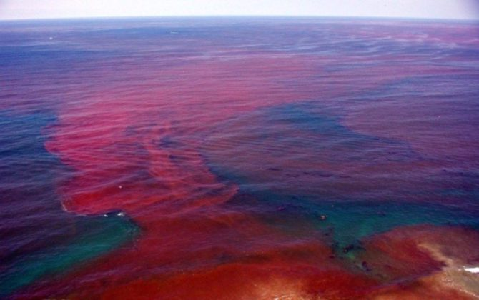 Algae bloom red ocean