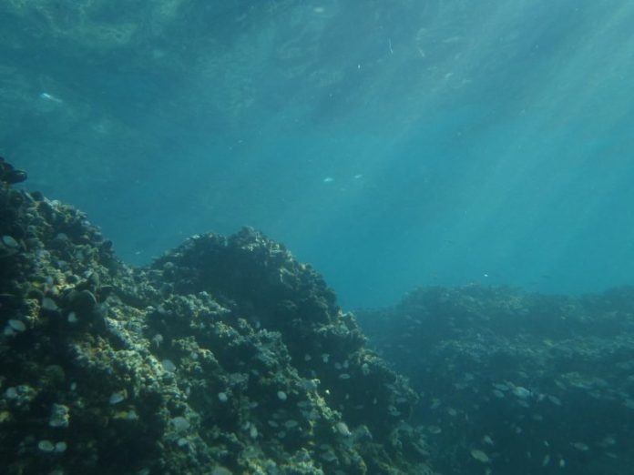 Impact of marine carbon on climate change to be investigated by Warwick Scientists