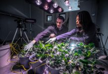 "Peanut Plant's ""Chemical Breath"" Could Give Clues to Drought and Other Stresses"