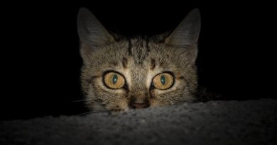 cat eyes at night