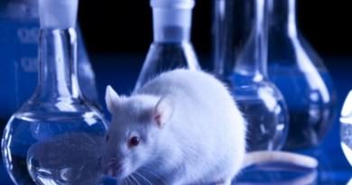 Mice used in Scientific Research