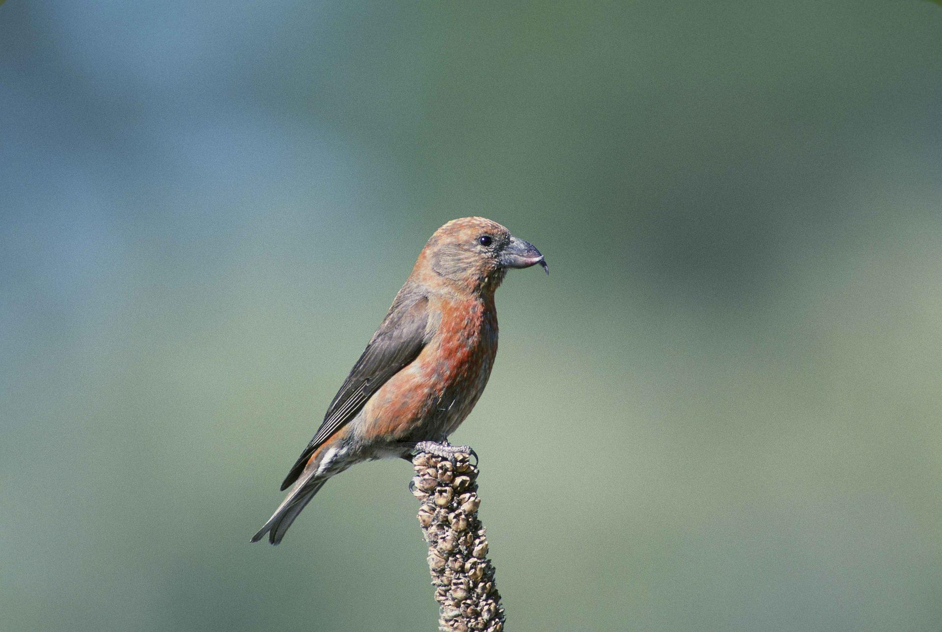 Birds Beaks Amp Adaptations
