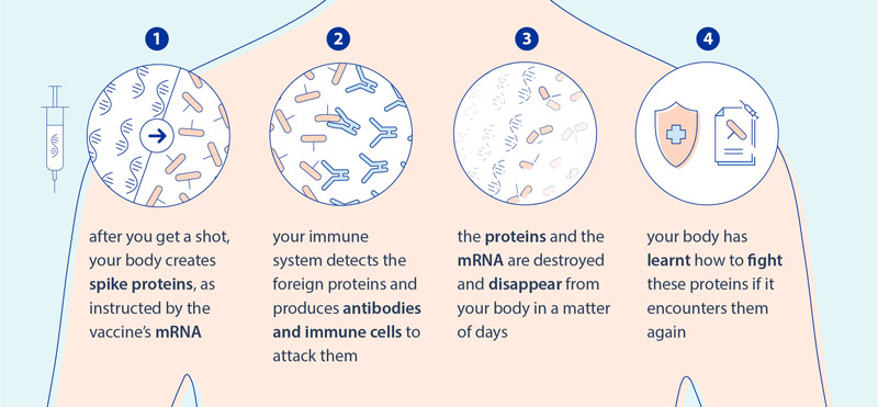 How mRNA vaccines protect you against COVID-19 © European Union, 2021