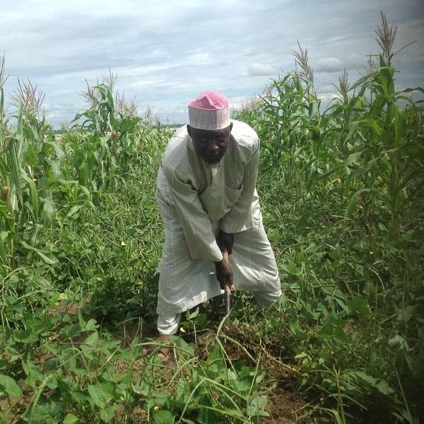 Cowpea farmer