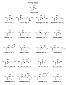 Amino acids study sheet also printable rh sciencenotes