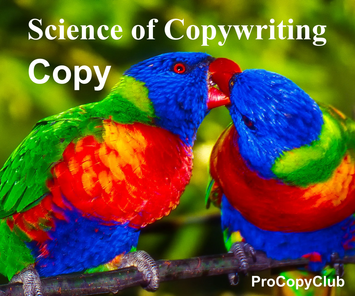 copy and copywriting - image of parrots
