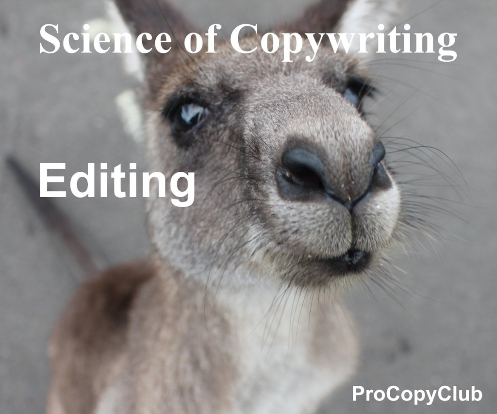 How to edit copy so it shines - image of baby roo