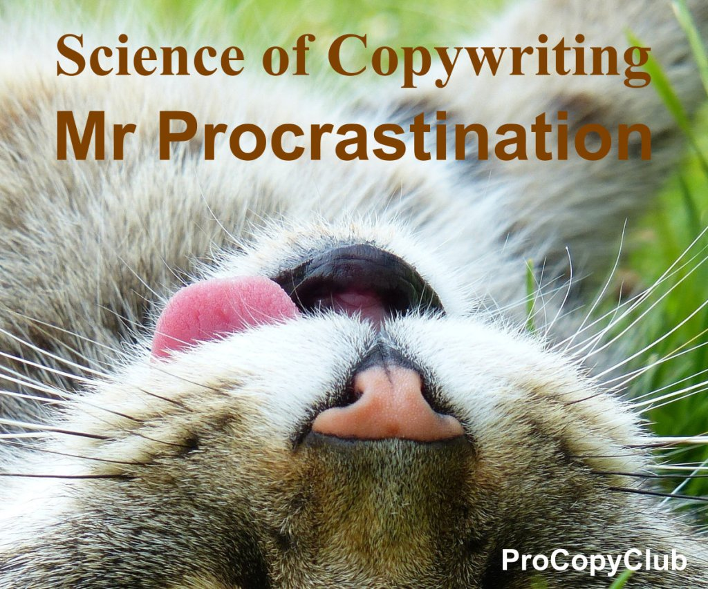 Don't let Mr Procrastination Stop You Writing - image of Mr Procrastination Cat