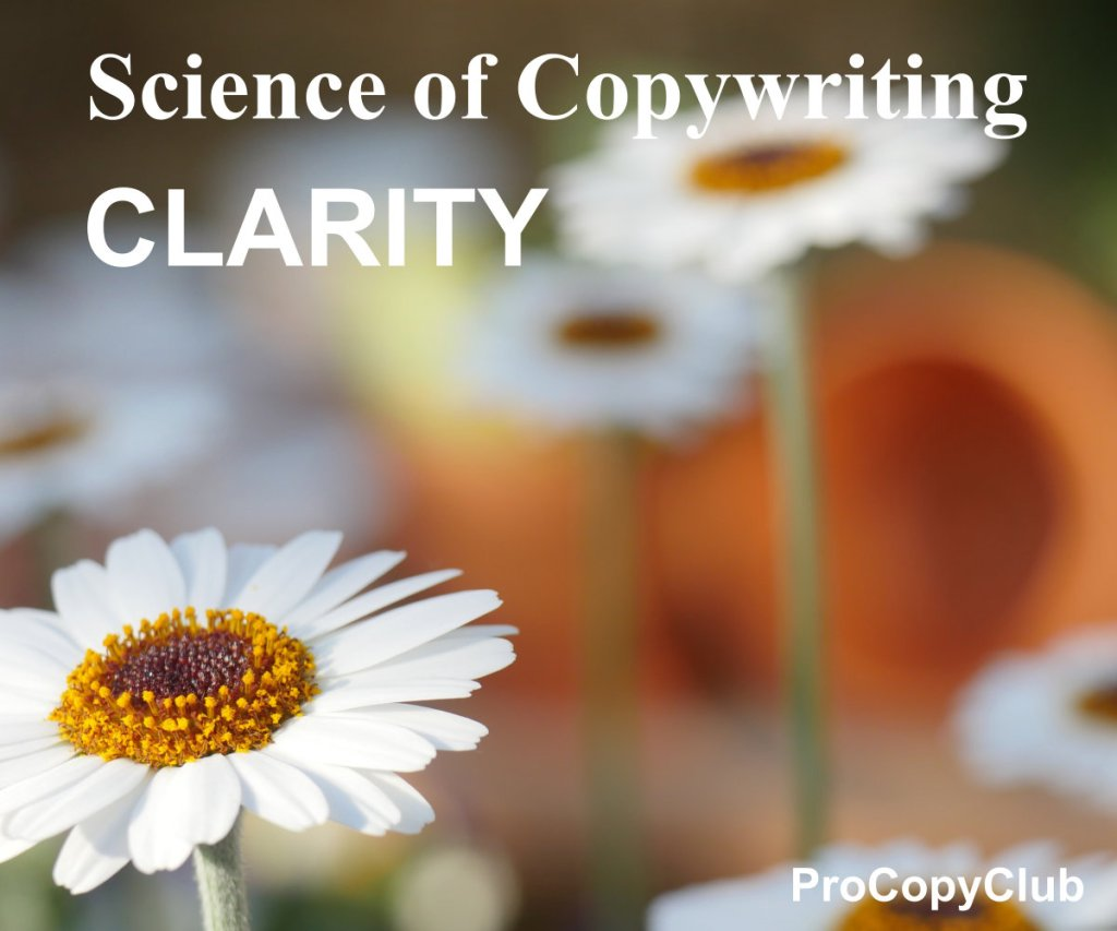 How To Write The Best Copy - Real Motivation For Copywriters - image of highly focused daisy