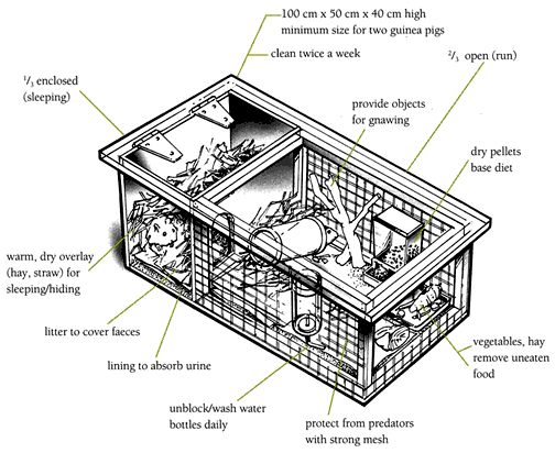 Hutch diagram / Guinea pigs / Animal care / Caring for