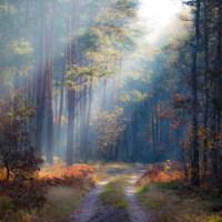 Valiosos bosques