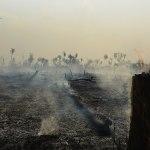 La déforestation établit un nouveau record en Amazonie brésilienne