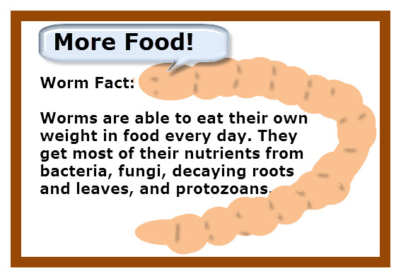 What Should You Feed Earthworms