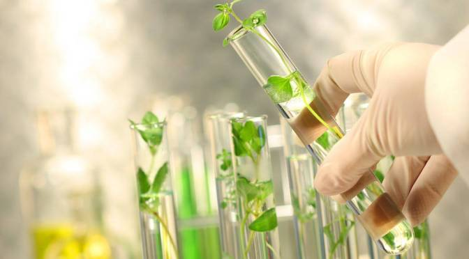 What is Plant Tissue Culture?