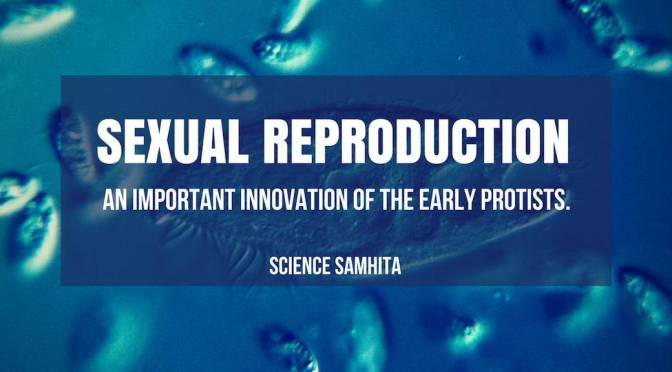 Sexual Reproduction – An Important Innovation of the Early Protists.​