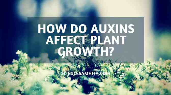 How do Auxins affect Plant growth?