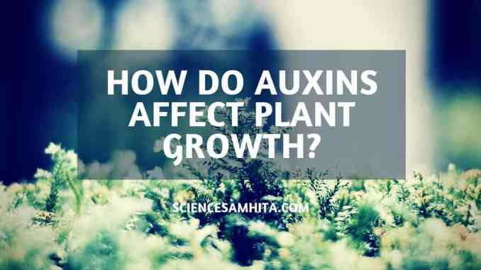 effect-of-auxins-on-plant-growth