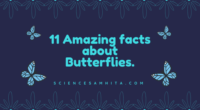 11 Amazing facts about Butterflies.