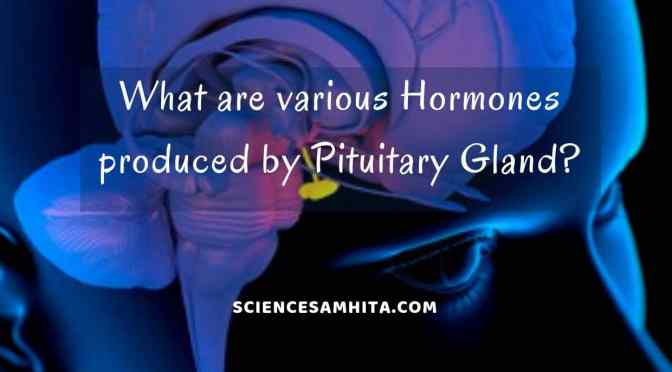 What are various Hormones produced by Pituitary Gland?
