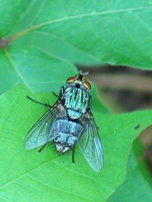 Quel Insecticide Pour Les Asticots : insecticide, asticots, Asticots, L'oreille, Sciences, Avenir