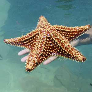 facts about starfish science
