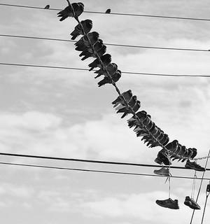 Bird on a wire!