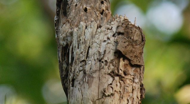 Mystery Monday – this week's Mystery Creature