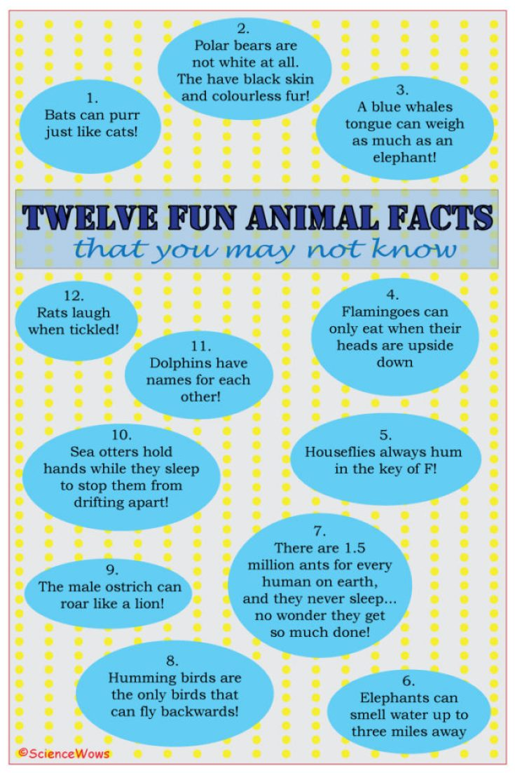 12 Animal Facts that you may not know