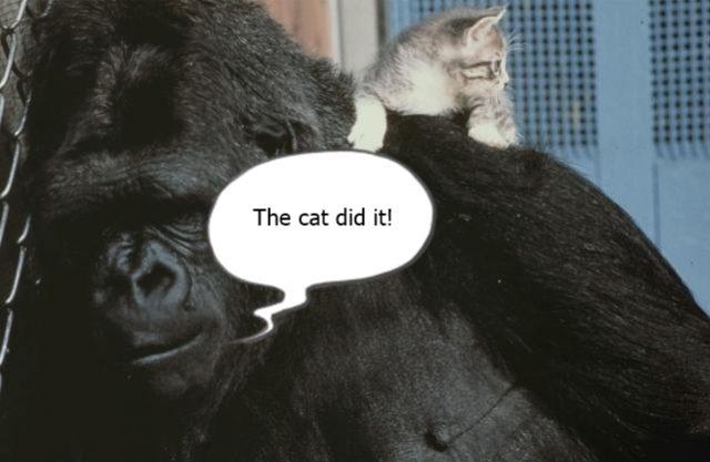 Koko The Gorilla2