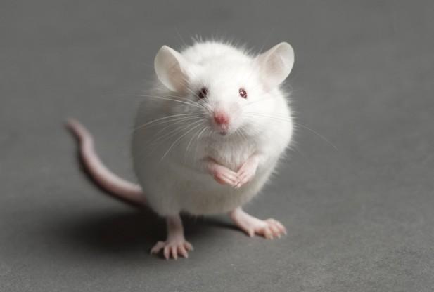 mice 4