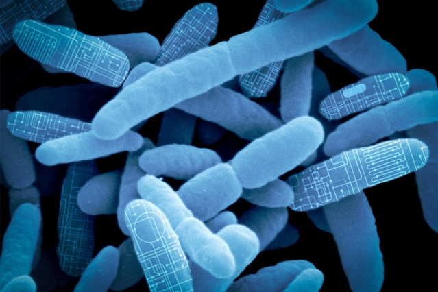 MIT spinout Synlogic is re-programming bacteria found in the gut as