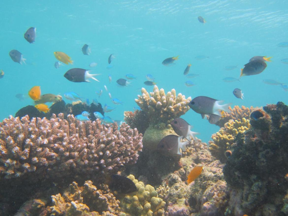 Study links altered brain chemistry, behavioral impairments in fish exposed to elevated CO2