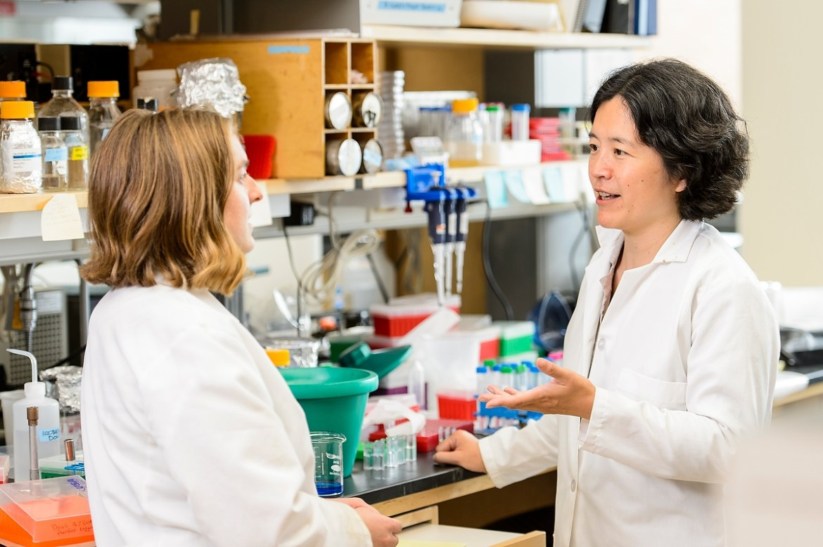 "Jue ""Jade"" Wang (right), associate professor in the Department of Bacteriology, works with student Christina Johnson in Wang's lab in the Microbial Sciences Building. Wang is the recipient of a Howard Hughes Medical Institute Faculty Award."
