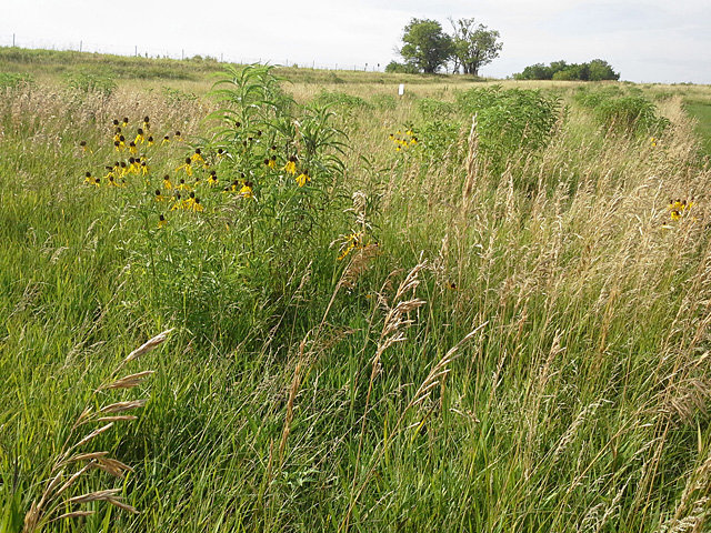 ARS scientists found antibiotic-resistant bacteria occurring naturally in undisturbed Nebraska prairie soils. Credit: Photo by ARS