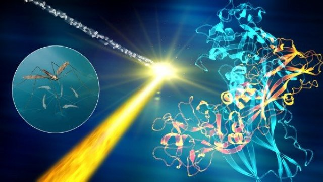 The mosquito larvicide BinAB is composed of two proteins, BinA (yellow) and BinB (blue). Inside bacterial cells, BinAB naturally forms nanocrystals. Using these crystals and the intense X-ray pulses produced by SLAC's Linac Coherent Light Source, scientists shed light on the three-dimensional structure of BinAB and its mode of action. Credit: SLAC National Accelerator Laboratory