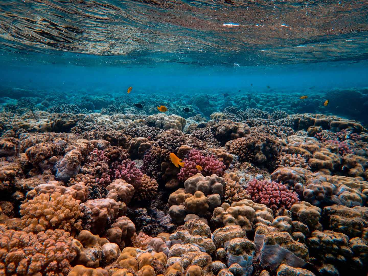 scenic photo of coral reef