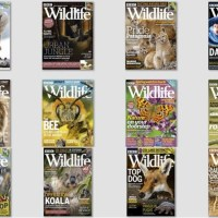BBC Wildlife – 2020 Full Year Collection
