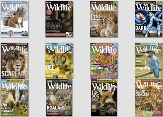 download BBC Wildlife – 2019 Full Year Collection