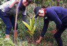 Rathnapura Tree Planting